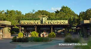 animal kingdom front gate