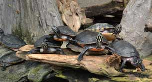 reptile facts turtles